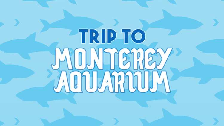 Trip to Monterey Aquarium